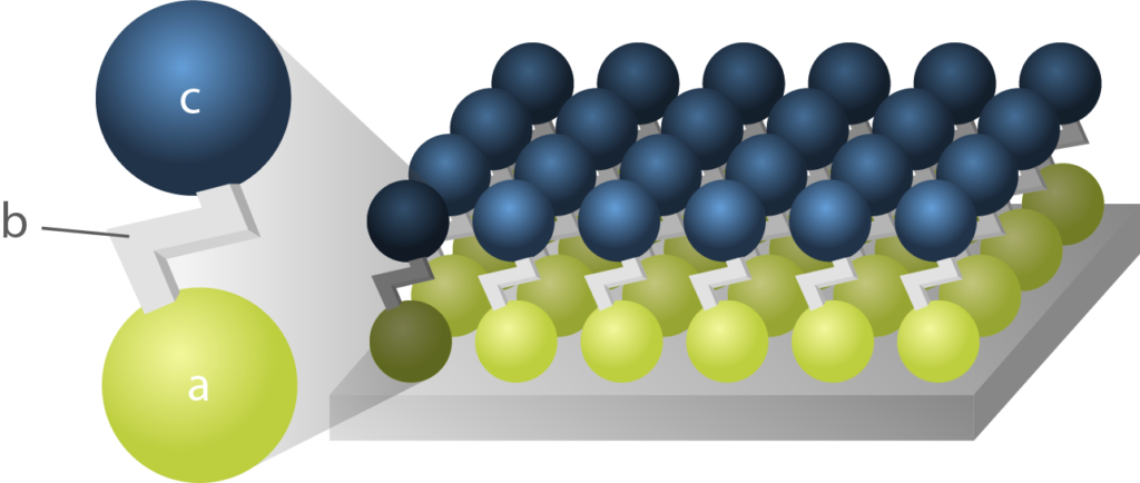Schematic representation of a Self-Assembled Monolayer molecule